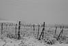 Gel de vigne (zuhmha) Tags: bulgarie bulgaria winter hiver mogilovo paysage landscape horizon niege snow route ciel pelouse lignes champ fence grille grillage barrière poteaux totalphoto