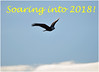Soaring (Sun~Lover) Tags: soaring eagles bald 2018 illinois foxriver newyear wings clouds sky