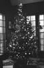 2017 Christmas Tree (John's Vintage Cameras) Tags: exakta ihagee vintage slr film analog madeingermany 35mm fomapan foma