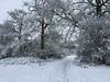 Winter Scene (Heaven`s Gate (John)) Tags: cold winter scene landscape shirley dickens heath snow trees johndalkin heavensgatejohn footpath field