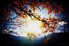 autumn sun II (Orton-Effect-Edit) (Veitinger) Tags: sonne landschaft landscape natur nature blätter leaf leaves blatt herbst autumn südtirol southtyrol altoadige vinschgau latsch bunt colorful farbe farben orton sun italien italy italia soft weich