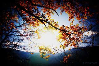autumn sun II (Orton-Effect-Edit)