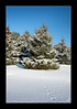 (Adam C Images) Tags: fuji xt2 mirrorless fujinon 1655 r lm wr weatherresistant snow winter blue sky pine tree nisi filters polarizer south frontenac township verona ontario canada 15x crop sensor xtrans iii