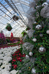 A greenhouse Christmas [explored] (kwtracyghostship) Tags: pennsylvania kwtracyghostship westernpa pittsburgh unitedstates us christmas trees decorations poinsetteias greenhouse whimsical bulbs