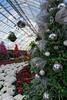 A greenhouse Christmas [explored] (kwtracyghostship) Tags: pennsylvania kwtracyghostship westernpa pittsburgh unitedstates us christmas trees decorations poinsetteias greenhouse whimsical bulbs