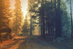 Dawn in the forest (li_chang) Tags: outdoor fog cold tree foggy usa green mystery autumn tents darkness magic light summer morning sun dark season fantasy wood california misty forest colorful campground mist branches bridalveil dawn tourism beautiful background path nature ground gradient yosemite camping road landscape nationalpark