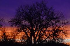 Bronco's Sunrise (dcstep) Tags: dsc2111dxo sonya7riii fe100400mmf45k56gmoss fe14xteleconverter cherrycreekstatepark cherrycreekreservoir reservoir lake water sky nature urban urbannature handheld allrightsreserved copyright2017davidcstephens dxophotolab captureone sunrise broncossunrise predawn twilight orange blue silhouette clouds colorful