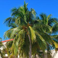 Key West (Florida) Trip 2016 0619Ri sq (edgarandron - Busy!) Tags: florida keys floridakeys keywest resort resorts casamarina