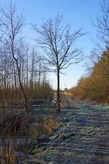 Am Legerader Wald (paulh.petersen) Tags: elements