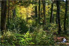"""Automne sous bois """"2017"""" (Christian Labeaune) Tags: 2017 paysages christianlabeaune châtillonnais forêt automne forêtsousbois chatillonsurseine21400 france côtedorbourgognefranchecomté"""