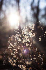 December 20: Wintery Light (Jenny Stein) Tags: