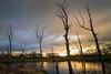 Freshney Pond Grimsby- (Allan A Albery) Tags: laceby freshney birds reflections sunset rain sonya7ii sony2470mmzeiss deadtrees pond wildfowl cfaa daarklands