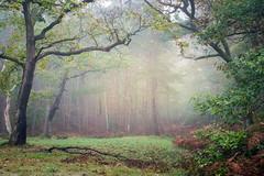 Au pays des songes... (Thomas Vanderheyden) Tags: forest foret nature beautifulearth ngc paysage landscape fog brume brouillard thomasvanderheyden halatte colors couleur tree arbre elfes onirisme
