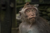 IMG_9219 (alexjones30) Tags: monkey forest canon money bali indonesia ubud eos travel 2017