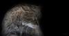Wild One (babsbaron) Tags: nature tiere animals katzen cats wild wildkatze wildcat lüneburg lüneburgerheide wildpark raubtier predator jäger hunter