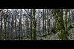Trees (JoshJackson84) Tags: canon60d sigma18250mm europe uk england cumbria lakes lakedistrict buttermere trees cinematic close up