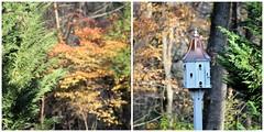 late Fall color & bokeh (karma (Karen)) Tags: baltimore maryland home backyard fallcolor dof bokeh diptych picmonkey hbw