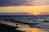 Early birds (Olli Ronimus) Tags: pärnu rand ranta uimaranta bird sunset sea ocean beach sky water sand