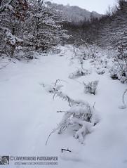 Forme invernali (EmozionInUnClick - l'Avventuriero photographer) Tags: sibillini cespuglio inverno neve valledivisso