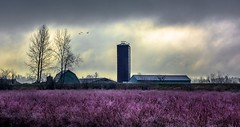 Winter dormancy (Christie : Colour & Light Collection) Tags: farm blueberry evening field pacificwestcoastwinter pacific west coast blueberrycrop blueberryfarm blueberryfield dormancy winter january 2018 dyke silo tower sky clouds light pacificwestcoast canada bc britishcolumbia barn house country metrovancouver mapleridge pacificnorthwest pacificnorthwestwinter