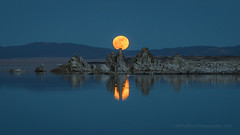 Blue Hour Moon Rise (Jeffrey Sullivan) Tags: moon rise easternsierra milkyway leevining monocounty california united states usa night landscape nature photography astrophotography astronomy canon eos 6d photo copyright 2018 jeff sullivan january mono lake reflection new years day supermoon