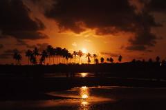 (Fernando Starks) Tags: pôrdosol árvore entardecer sunset lake rio river