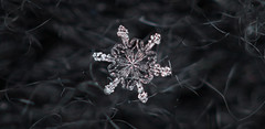 Snowflake n° 5 - Winter 2017-2018 - Switzerland (Rogg4n) Tags: macro realmacro snow snowflake flocondeneige white extensiontubes kenko efs60mmf28macrousm winter hiver bokeh nature symetry pattern crystal chauxdefonds switzerland ice cold wonderland wool scarf closeup season quiet black jewel dendrite purple star pink canoneos80d