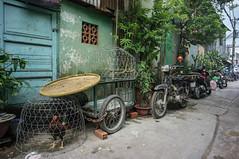 don't chicken out (kuuan) Tags: voigtländerheliarf4515mm manualfocus mf voigtländer15mm aspherical f4515mm superwideheliar sonynex5n apsc hochiminhcity hcmc saigon vietnam chicken chinatown street cholon