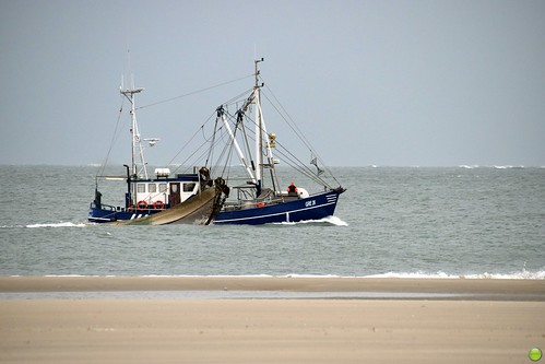 Do trawlers always come in pairs?