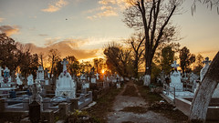 05.11.2017 (Fregoli Cotard) Tags: graveyard family dailyjournal dailyphotography dailyproject dailyphoto dailyphotograph dailychallenge everyday everydayphoto everydayphotography everydayjournal aphotoeveryday 365everyday 365daily 365 365dailyproject 365dailyphoto 365dailyphotography 365project 365photoproject 365photography 365photos 365photochallenge 365challenge photodiary photojournal photographicaljournal visualjournal visualdiary 309365 309of365