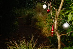 Decorated Garden (Dave Roberts3) Tags: newport wales gwent tredegarhouse garden christmas xmas grass decorations festive seasonal path red silver bauble