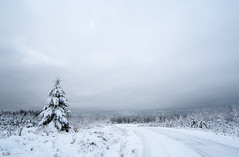 Winter landscape (explored) (- Man from the North -) Tags: winterlandscape winter landscape scenery trees moretrees road winterwonderland greetingsfromfinland finland sky cloudy greyday december nikond500 samyang14mmf28 samyang nikon landscapephotography snow tree forest