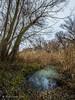 Bosque de ribera - Riverbank forest (Fernando Guirado) Tags: 2017 diciembre lleida riverbankforest bosquederibera bosque ribera riverbank olympus em1mk2 1224mm 1224pro