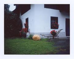 A Pumpkin (sycamoretrees) Tags: analog automatic100 autumn film fp100c fp100c201702 fuji instantfilm landcamera marianrainerharbach model100 packfilm polaroid pumpkin type100