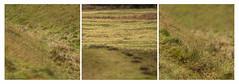 Warham Iron age surfaces (AJ Mitchell) Tags: arham holkham ironage hillfort norfolk texture earthworks britishisles