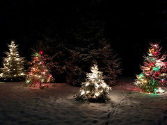 all lit up for the holidays! (karma (Karen)) Tags: baltimore maryland home backyard xmastrees lights decorations snow iphone topf25