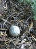 Golf, anyone? ([S u m m i t] s c a p e) Tags: bluemountains leura nativeplants summer bluemountainsnationalpark newsouthwales australia