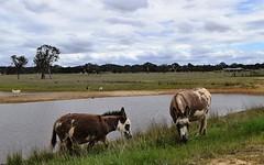 667 Mulligans Flat Road, Sutton NSW