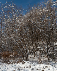 Bussey Brook Meadow (Plant Image Library) Tags: arnold aboretum winter boston massachusetts plants trees shrubs botany morphology science bussey brook meadow
