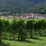 Le vigne di Caldaro thumbnail