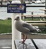 Australia 2017 - Scarborough (chris wright - hull) Tags: australia queensland scarborough fishandchips seagull janetdulling janet janetwright chris chriswright stephanie stephaniewright andrew andrewlee