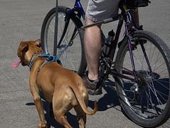 Tethered To The Bicycle (swong95765) Tags: dog canine animal pet exercise bicycle tongue