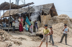 Family raw sugar processing business (Pejasar) Tags: family business sugarcane processing near delhi india home work boy child pants torn back shirtless plant farm woman women