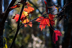 Winter afternoon, touch of sun. (MJ6606) Tags: autumn forest closeup tree leafs flowersplants florida outdoor winter wildlife nature