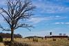 Blue Skies (ramseybuckeye) Tags: blue sky allen county ohio conant road farm rural bales tree barn