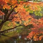 IMG_0614 小石川後楽園 thumbnail