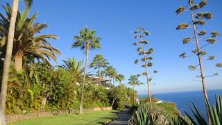 La Gomera (Spain's Canary Islands) - palms & sea @ Playa de Santiago