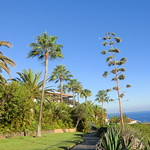 La Gomera (Spain's Canary Islands) - palms & sea @ Playa de Santiago thumbnail