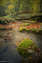 Autumn in Burgundy (Laurent Lamour) Tags: burgundy bourgogne france french landscape water river long exposure automne autumn