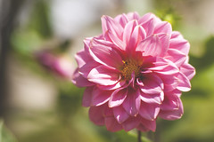 (Matheus.Fernando) Tags: flowers flor flores rosa rosas verde lindo beautiful nice good vintage contrast foto